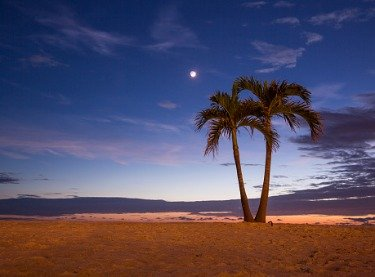 A beach with two palm trees in the evening in Tampa FL
